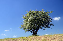 Arbre simple Images stock