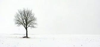 Arbre simple dans le domaine pendant la première neige Photos stock
