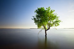 Arbre simple dans le lac Photos stock