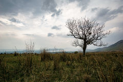 Arbre simple devant Loch Lomond Images libres de droits