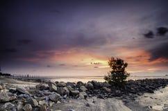 Arbre simple entouré par la pierre au littoral avec le fond coloré de coucher du soleil pendant l'eau de marée basse Image stock