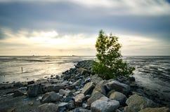 Arbre simple entouré par la pierre au littoral avec le fond coloré de coucher du soleil pendant l'eau de marée basse Photographie stock libre de droits