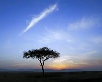 Arbre simple et lever de soleil d'acacia images libres de droits