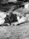 Arbre simple et un mur de pierres sèches cassé avec les nuages dramatiques Images libres de droits