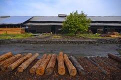 Arbre simple près de la rivière à l'usine de charbon de bois Images libres de droits