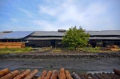 Arbre simple près de la rivière à l'usine de charbon de bois Image libre de droits
