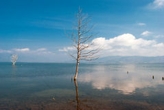 Arbre simple s'élevant dans le lac de marais images stock