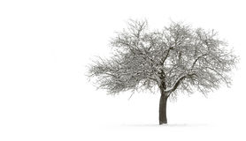 Arbre simple Snow-covered avec le copyspace Photo stock