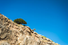 Arbre simple sur la montagne Image stock