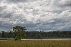 Arbre simple sur le fond de la forêt et du lac blanc, nature estonienne Photos stock