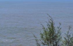 Arbre simple - sur un fond d'océan photographie stock libre de droits
