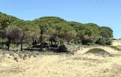 Arbre situé dans les dunes Photographie stock libre de droits