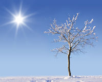 Arbre Snow-covered Photos stock
