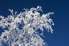 Arbre Snow-covered Image stock