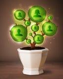 Arbre social de réseau sortant du pot de fleurs Image stock