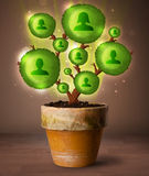 Arbre social de réseau sortant du pot de fleurs Photo stock