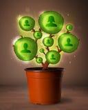 Arbre social de réseau sortant du pot de fleurs Photographie stock