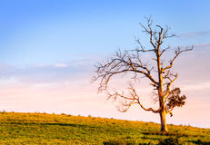 Arbre solitaire Photo libre de droits
