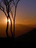 Arbre solitaire au coucher du soleil photos stock