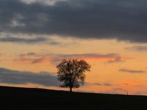Arbre solitaire au coucher du soleil sur une colline photo libre de droits