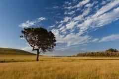 Arbre solitaire au passage couvert de péninsule de Kaikoura, Nouvelle-Zélande Photos libres de droits