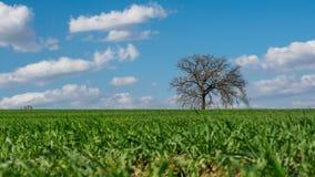 Arbre solitaire dans la campagne autour de la ville de Montefalco en Umbria Italy photo stock