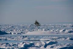 Arbre solitaire dans la glace Image stock