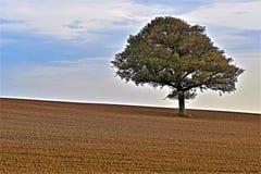 Arbre solitaire dans le domaine fraîchement labouré, haut Melton, Doncaster image stock