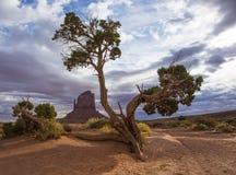 Arbre solitaire dans un désert Images stock