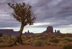 Arbre solitaire dans un désert Images libres de droits