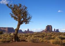 Arbre solitaire dans un désert Photographie stock libre de droits