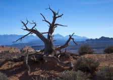 Arbre solitaire dans un désert Photographie stock