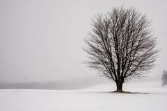 Arbre solitaire dans un domaine neigeux photo stock