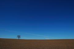 Arbre solitaire dans un pré stérile Photo libre de droits