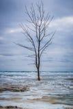 Arbre solitaire en ressac gelé photographie stock libre de droits