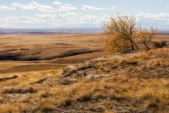 Arbre solitaire et balayé par le vent haut au-dessus de la prairie occidentale Photo libre de droits
