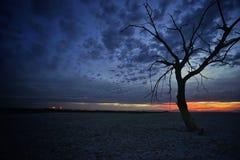 Arbre solitaire et coucher du soleil Images stock