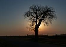 Arbre solitaire et un coucher du soleil de prairie image libre de droits