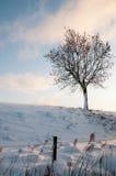 Arbre solitaire sur la colline neigeuse Photos libres de droits