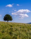 Arbre solitaire sur une colline Photos stock