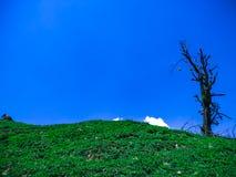 Arbre solo sur une colline sans feuilles avec le ciel bleu comme fond images libres de droits