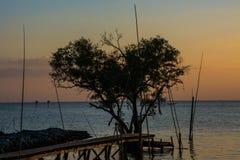 Arbre sous forme de coeur avec le pont en bois sur la mer au crépuscule dans Bangpu, en Thaïlande Photo libre de droits