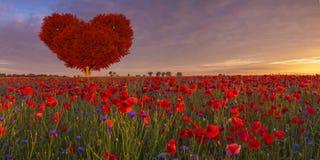 Arbre sous forme de coeur rouge sur le pré-symbole de pavot du jour d'amour et de ` s de Valentine Photo libre de droits