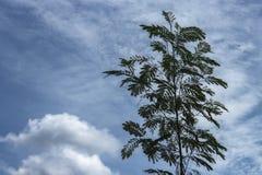 Arbre sous le ciel bleu, arbre discret d'image Photographie stock libre de droits