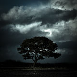Arbre sous les cieux orageux, Oswestry, Shropshire, Angleterre Photos stock