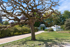 Arbre splendide dans le jardin royal de Laeken Image stock