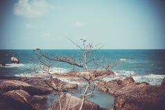 Arbre sur des roches près de la mer dans de rétros couleurs Images stock