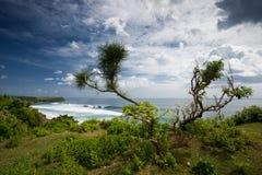 Arbre sur la falaise de plage de Balangan dans Bali Images libres de droits