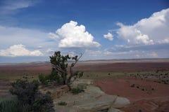 Arbre sur la falaise sur le San Rafael Swell Photos libres de droits