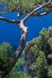 Arbre sur la mer Photographie stock libre de droits